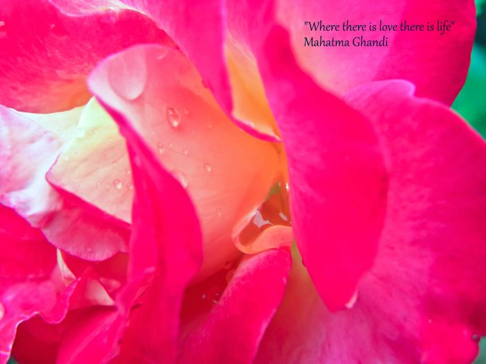 love rose and raindrops love life quote