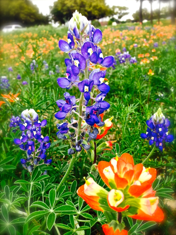 Lauren's wildflowers