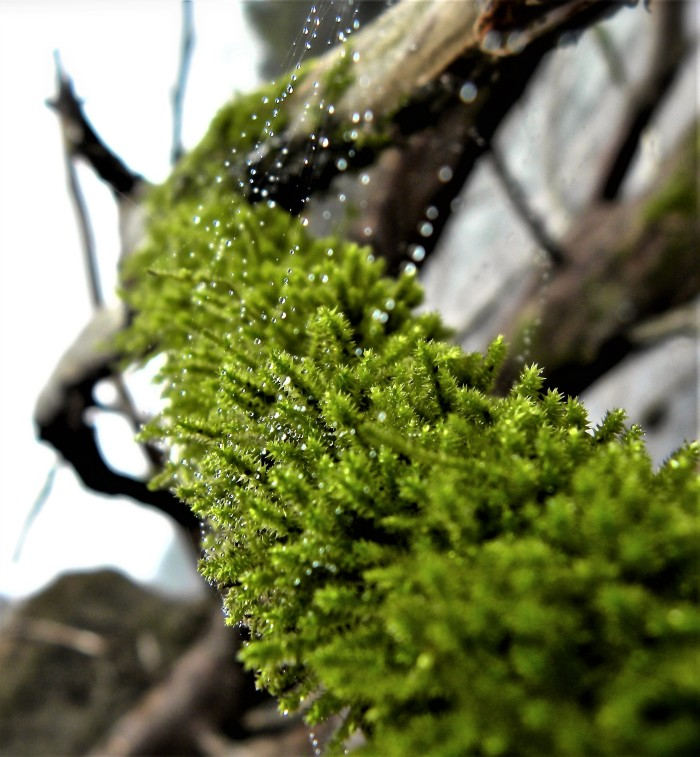 moss and spider web